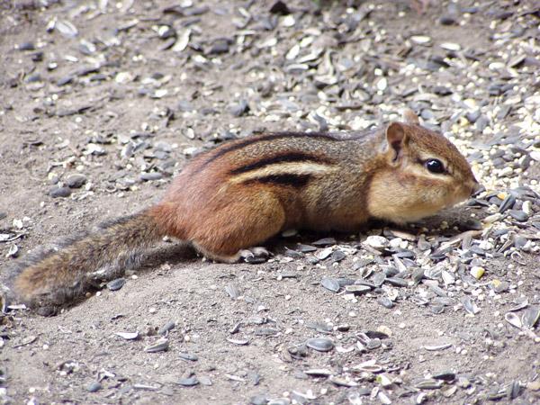 Green Brook Nj >> Chipmunks Ahoy!   Palisades Interstate Park in New Jersey